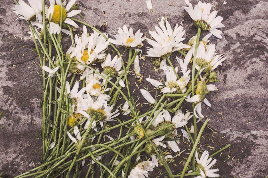 Cosas que debes saber del día de los muertos