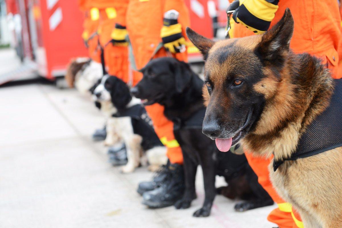 Perros Rescatistas: Héroes de cuatro patas
