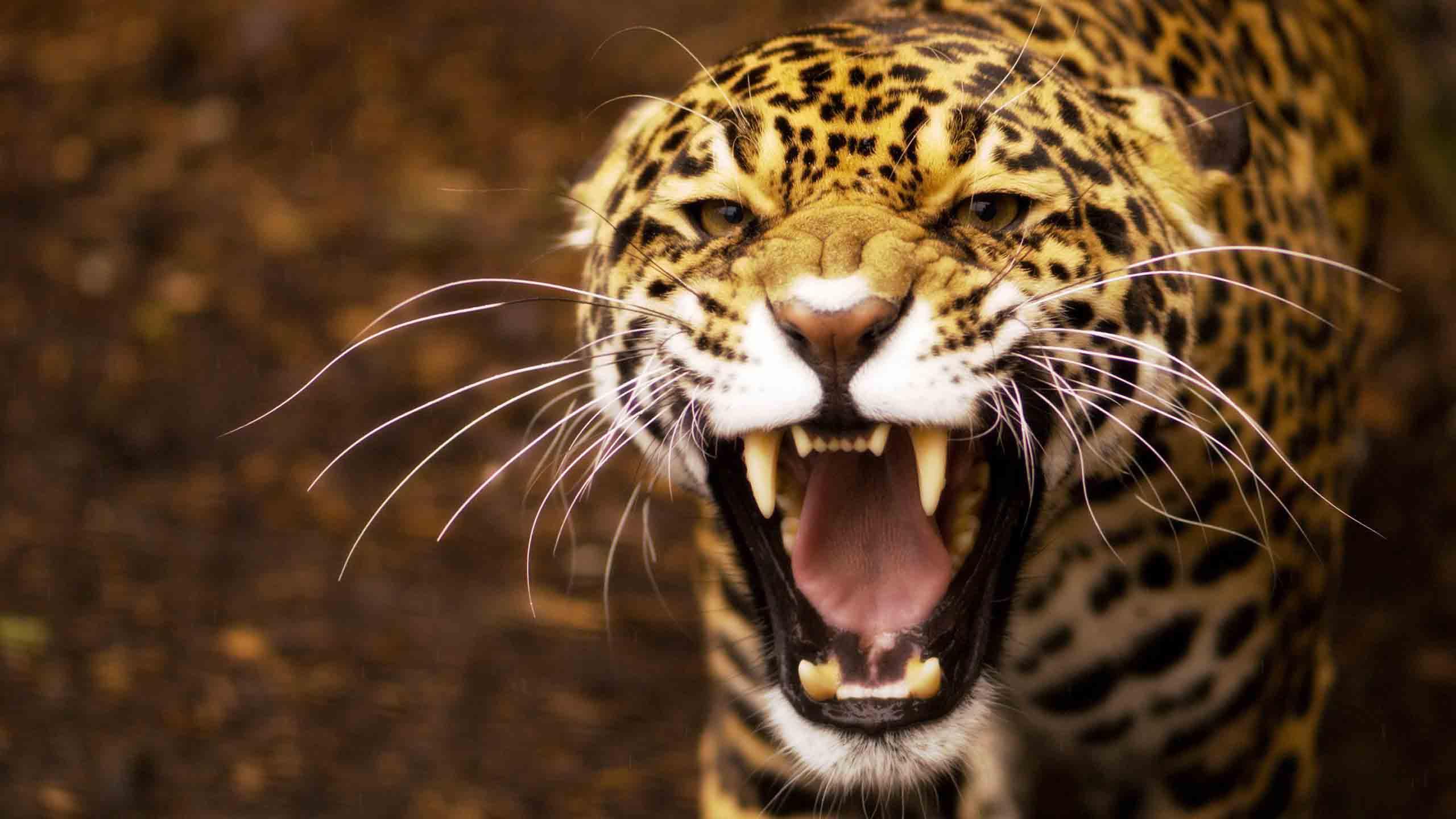 Día Mundial de los Animales: Las especies más amenazadas en México