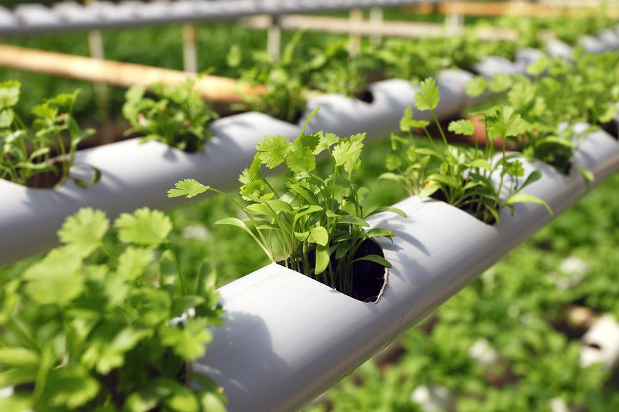 Hidroponía y Acuaponía: El futuro de la agricultura